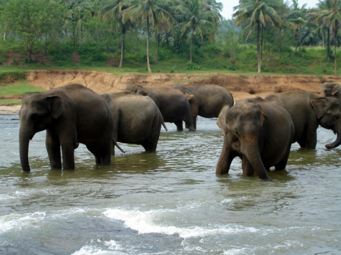 Sri Lanka-009